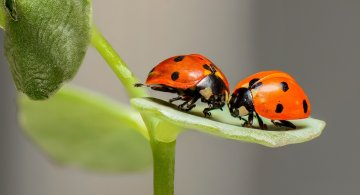 30 de poze cu...insecte!
