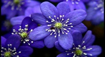 50 de poze splendide cu flori