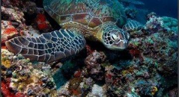 45 de poze subacvatice impresionante