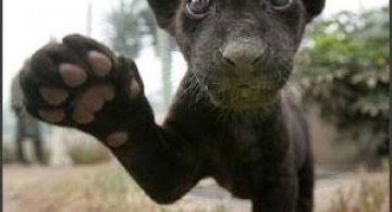 17 poze cu animale fericite