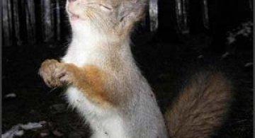 32 de imagini cu animale simpatice