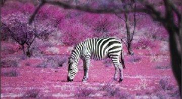 10 poze superbe: Africa