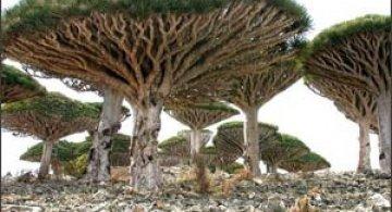 Cel mai bizar loc de pe planeta - Insula Socotra