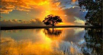 Copacii demni se inalta in 30 de poze minunate!