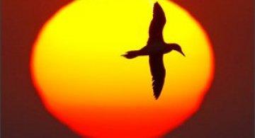 30 de fotografii profesioniste: Natura salbatica