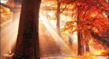 Jocuri intre lumina naturala, umbre, frunze de toate culorile...