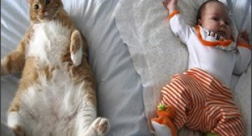 5 relatii intre animale si oameni