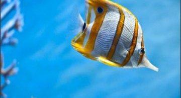 33 de wallpapere cu lumea submarina!