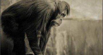 Animale. Emotii. Natalie Manuel