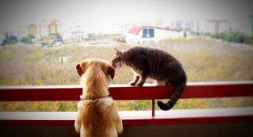 Caini si pisici in 22 de fotografii