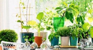 Idei verzi pentru interioare cu personalitate