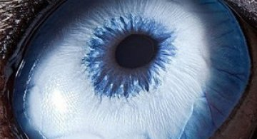 Harti oculare de Suren Manvelyan