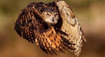 National Geographic da lectii de frumusete naturala