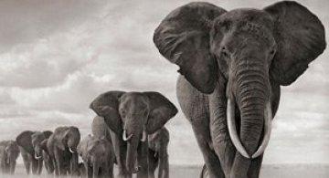 Recurs la Africa, de Nick Brandt
