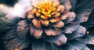 Arabescuri, flori, Photoshop: Chiara Biancheri