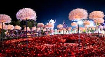 Lotusi cu doua milioane de petale din Thailanda