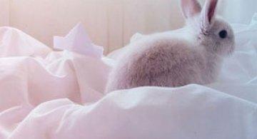 Urechila se intoarce: 20 de poze cu iepuri