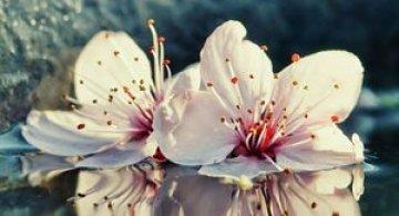 Florile culese de olandezul Oer-Wout