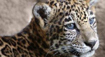 42 de super poze cu animale de Sooper Deviant