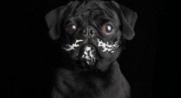 Ron Schmidt si studioul foto de portrete canine