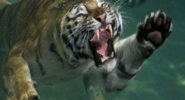Mukul Soman, natura, animalele si profunzimea Indiei