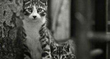 Rusul, pisicile si Turcia