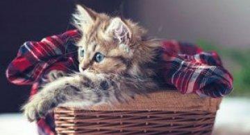 Ben Torode e proprietarul celei mai dragute pisici din lume