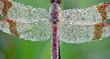 Insecte acoperite de stopi de roua, de David Chambon