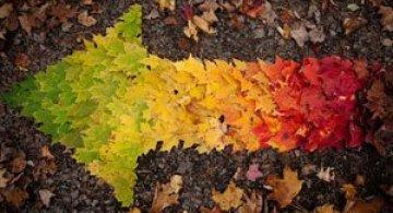 10 curcubee din frunze de toamna