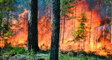 Mats Petersson da foc padurilor