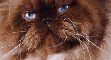 10 poze cu caini si pisici, de Ren Netherland