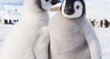 Regele pinguinilor imperiali