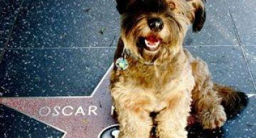 Ocolul lumii cu Oscar, cainele calator