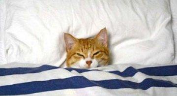 10 pisici prea adormite ca sa le pese
