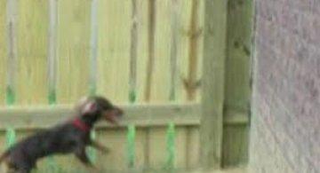 Video: Un soricar pe pereti
