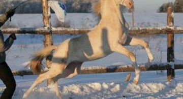 Cel mai frumos cal din lume, gasit pe net