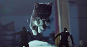 Video: Misiune imposibila cu pisici