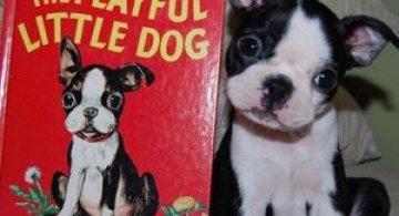 11 animale simpatice fata-n fata cu dublurile lor