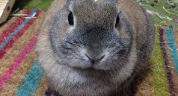 12 animale simpatice pozate cu Instagram