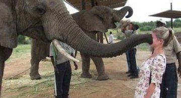 10 animale prea prietenoase