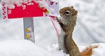 Mici aventuri cu veverite, de Nancy Rose