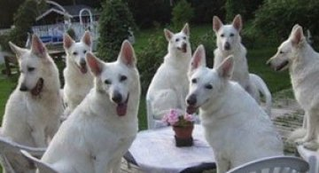 Invazia animalelor: 15 poze adorabile