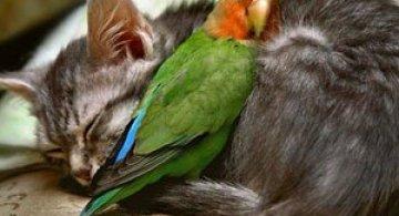 15 poze cu animale si imbratisari