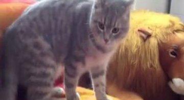 Video: Pisica ninja ataca!
