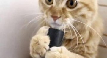 Video: Pisica obsedata de aspirator