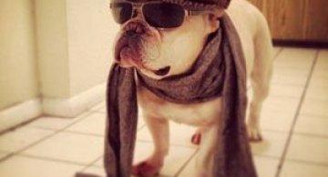 10 bulldogi cu multa personalitate