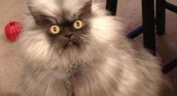 10 pisici amuzante culese de pe net