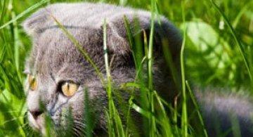 Video: Jucaria solara pentru pisici
