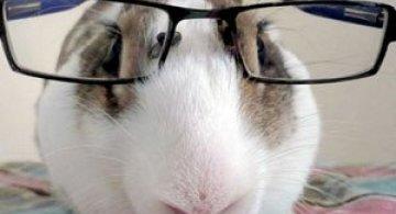 15 fotografii cu animale educate si inteligente