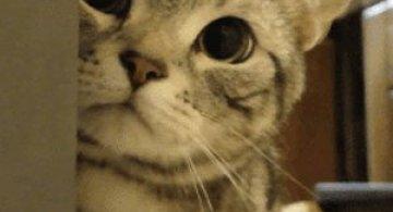 10 animatii adorabile cu pisici